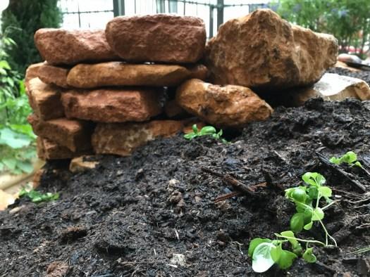 Déjà, des pousses de basilic sont plantées ! On a hâte de les voir grandir !