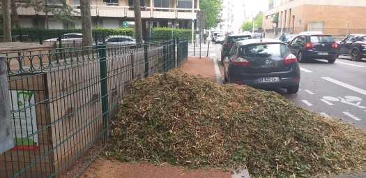 Livraison de matière sèche inattendue au composteur, mais ô combien bienvenue !