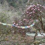 trek, rhodos in bloom