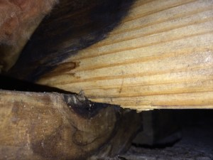 "Bob Byrnes photo of a compressing floor joist caused by ""dry rot""."