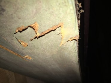 Photo of a rotten girder failure with fungus growth.