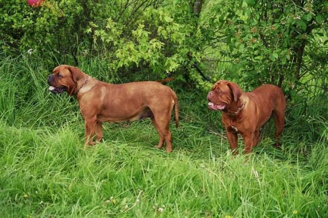 Ginger und Isabeaux vom Butjadinger Land