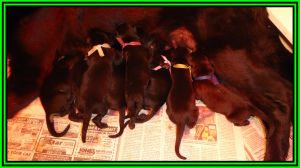 Litter Puppies Group Nursing 1 Day Old Framed