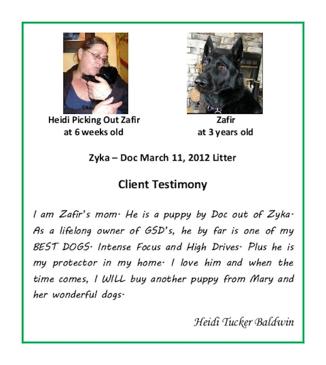 Heidi Tucker Baldwin Puppy Testimonial Resized