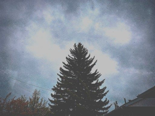 lone evergreen tree on a cloudy day