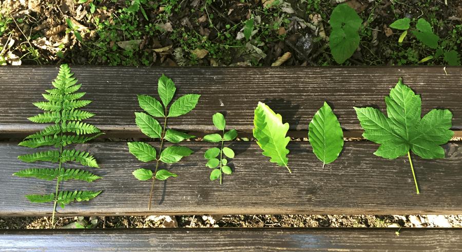 VONsociety: Das Mühlbach Bad Füssing, Kurpark, Bank mit Blättern