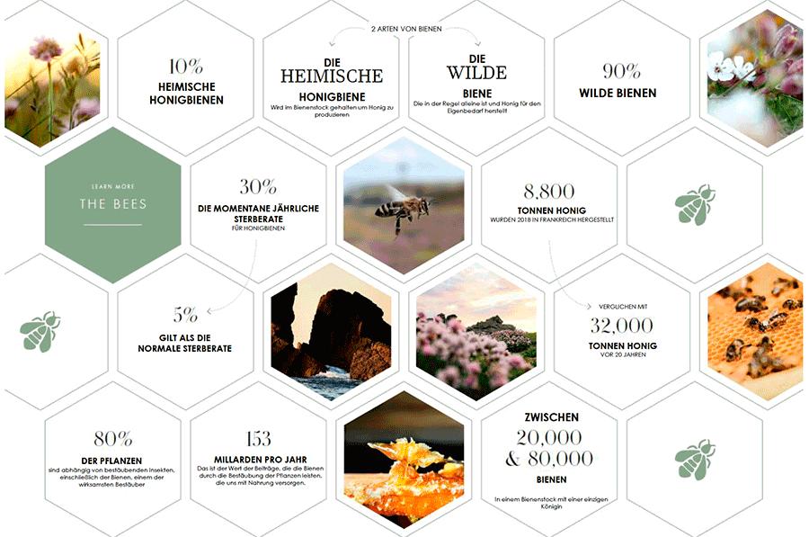VONsociety:  Übersicht mit Infos zur Biene