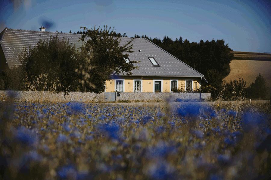VONsociety: im Vordergrund Kornblumenfeld, im Hintergrund das MIËLO Haus