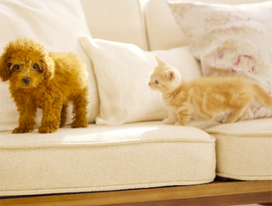 Nintendogs + Cats (3DS) Review
