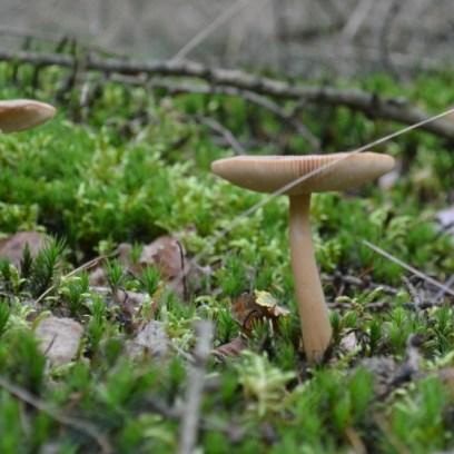 paddenstoel_2014