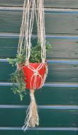 plantenhanger5