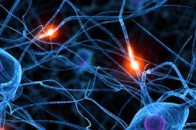 Les neurones et l'électricité