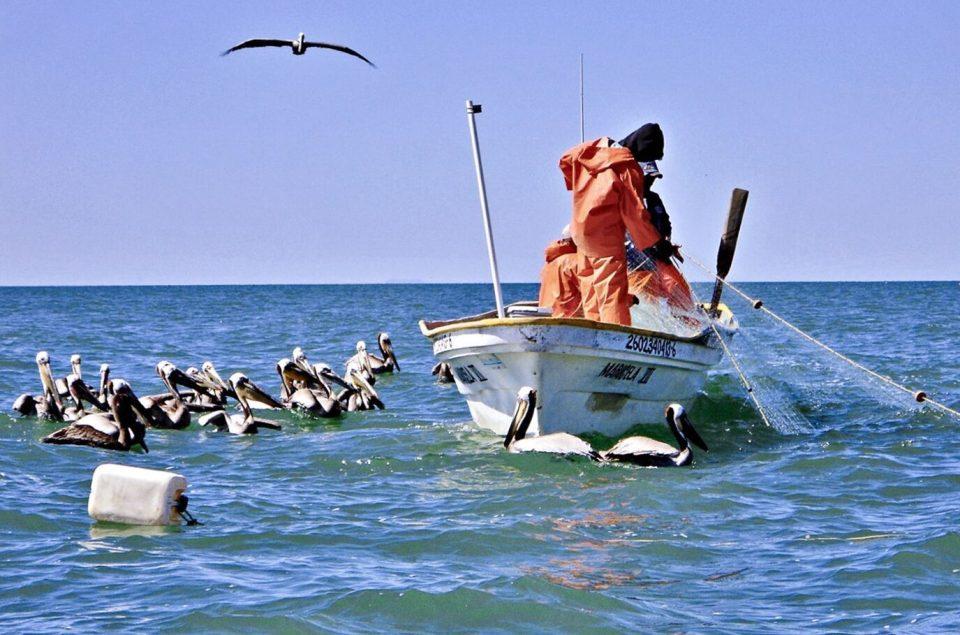 Pescadores del Alto Golfo de California rechazan plan federal de sustentabilidad