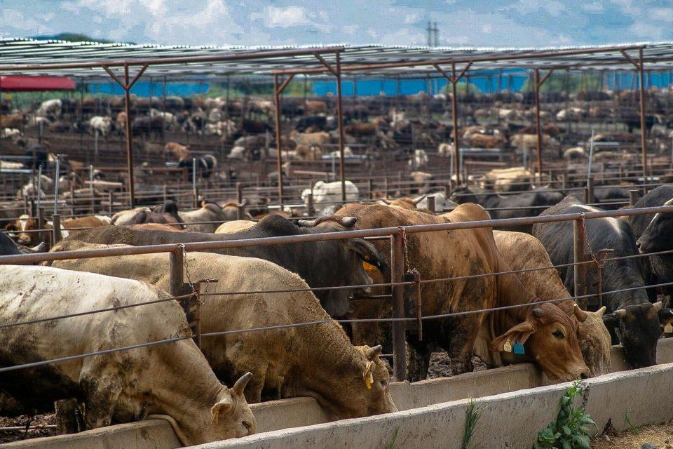 e959a22875fbf Abre México puertas de Singapur para la exportación de carne de ...