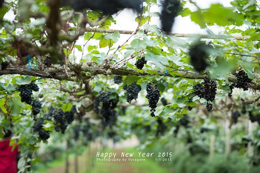 สวัสดีปีใหม่นะ