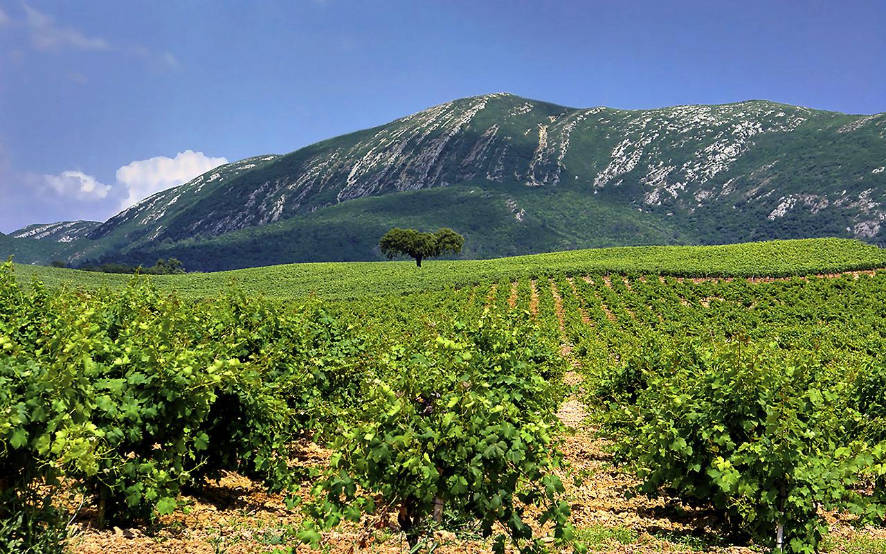 Rota do vinho da Península de Setúbal