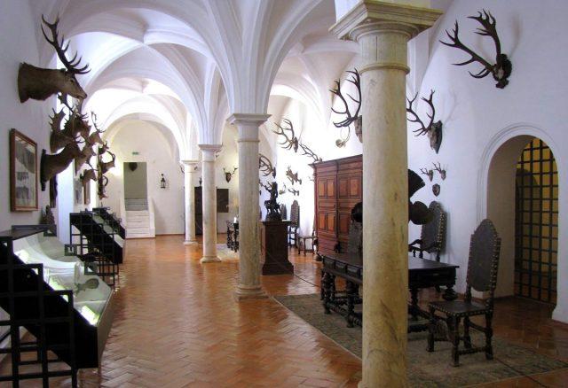 Museu da Caça e Arqueologia