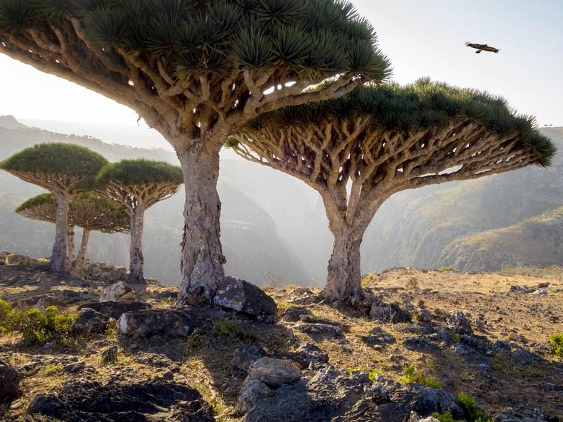 Socotra, Iémen