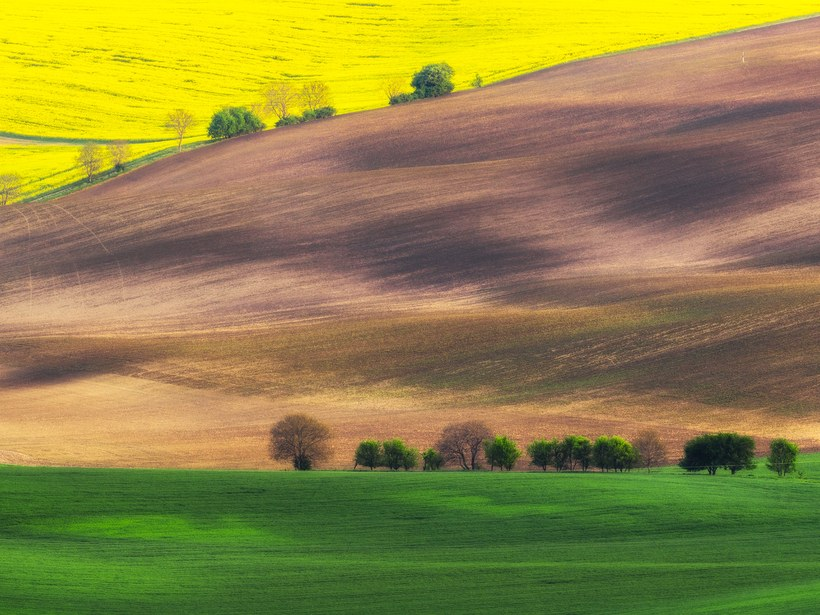 Campos da Morávia: República Checa