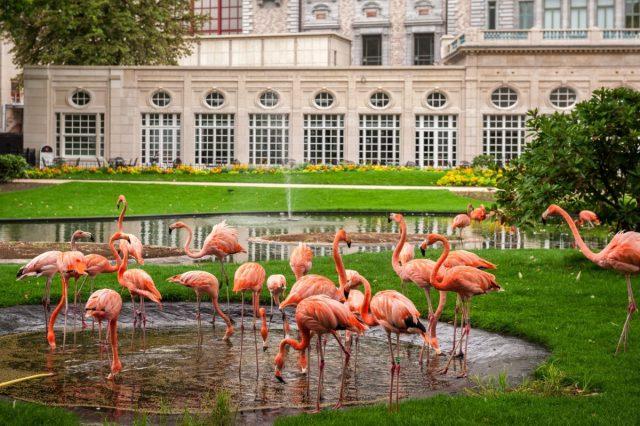 Zoo de Antuérpia