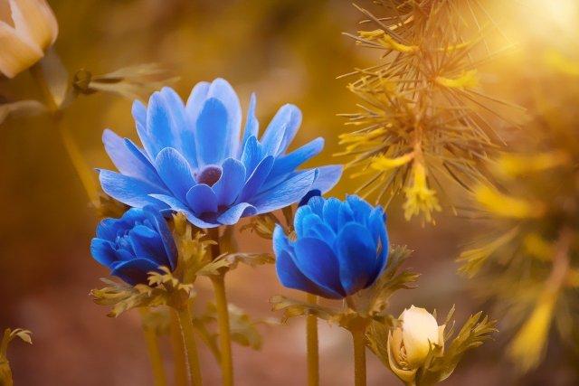 Flores azuis