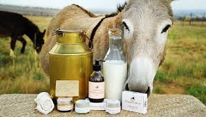 Does donkey milk sell for 7,000 rupees per liter in India?