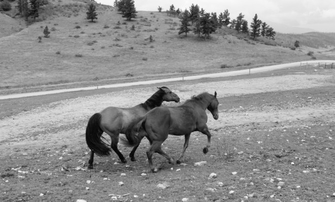 Toby and Monty out being horses.