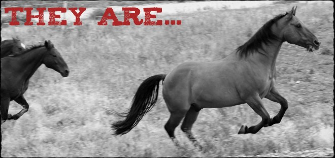 "Image of horses galloping together with text ""They are..."""