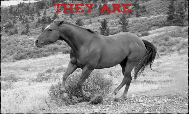"Image of a horse galloping with text ""They are..."""