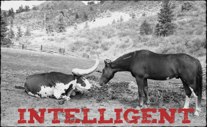 "Image of a horse smelling a cow closeup with text ""Intelligent"""