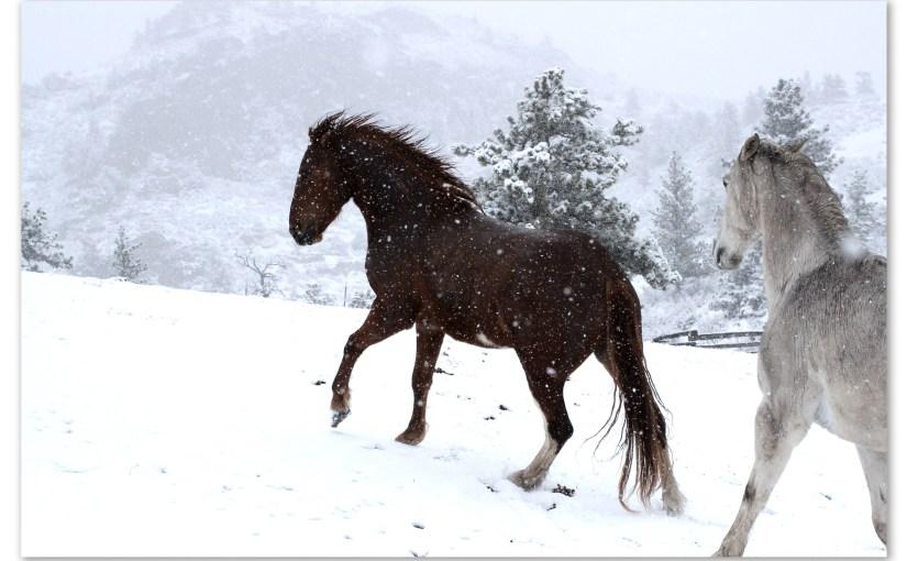 Snowy Days – Part II