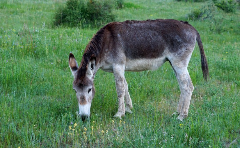 Image of a donkey in a field with wild flowers.