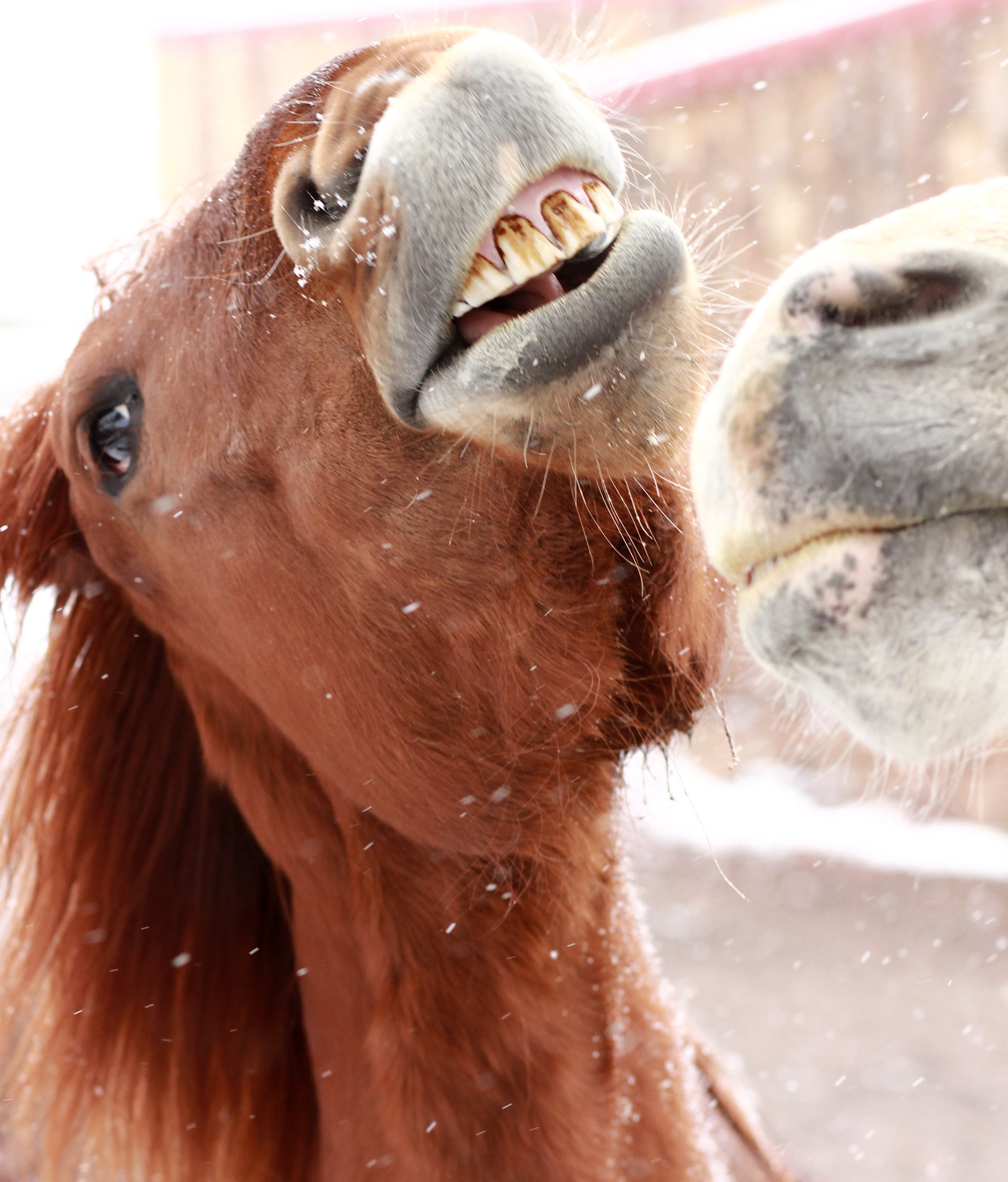others are quite happy about having a snow day...