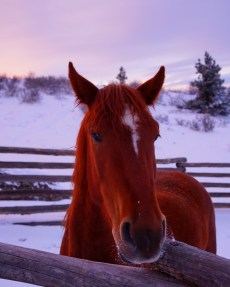 when a sunset turns a red horse into... well... a very red horse...