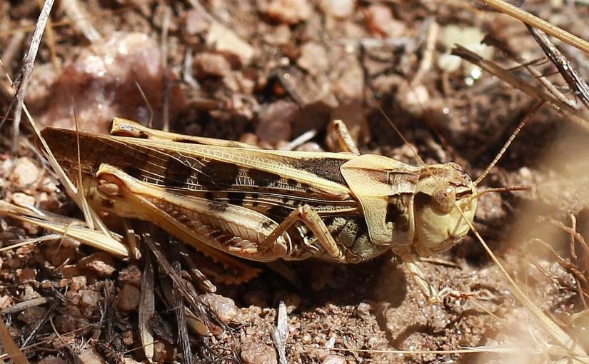 <em>grasshopper</em>