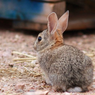 Just the cutest baby bun ever... (low resolution version)