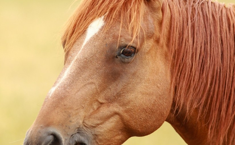 Very Photogenic Horse