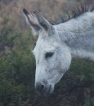 Donkey in the mist... (low resolution version)