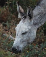 Donkey before the mist... (low resolution version)