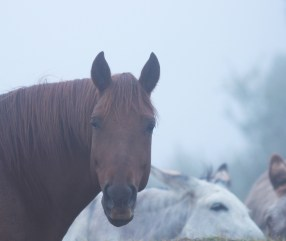 Red boy with his donkeys in the mist... (low resolution version)