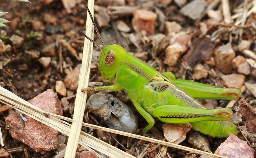 <em>Arthropoda</em>
