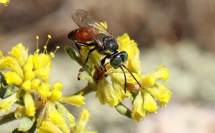 <em>Fake Bee!</em>