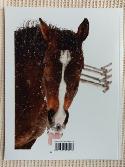 Snowy Equine Portraiture Back Cover