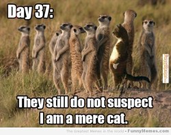 They still do not suspect