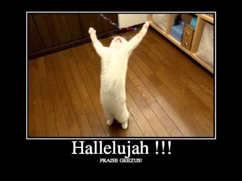Hallelujah Cat