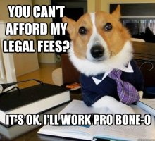Meet Lawyer Dog