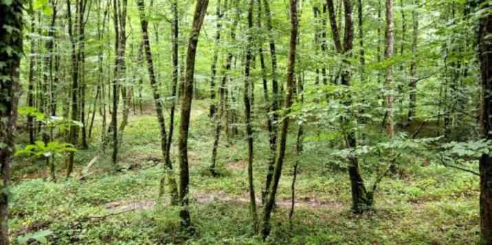 Climat : les forêts d'Europe font baisser les températures en été