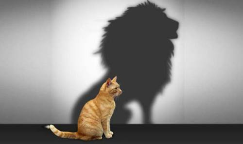 Image de soi - le chat et sa projection en lion