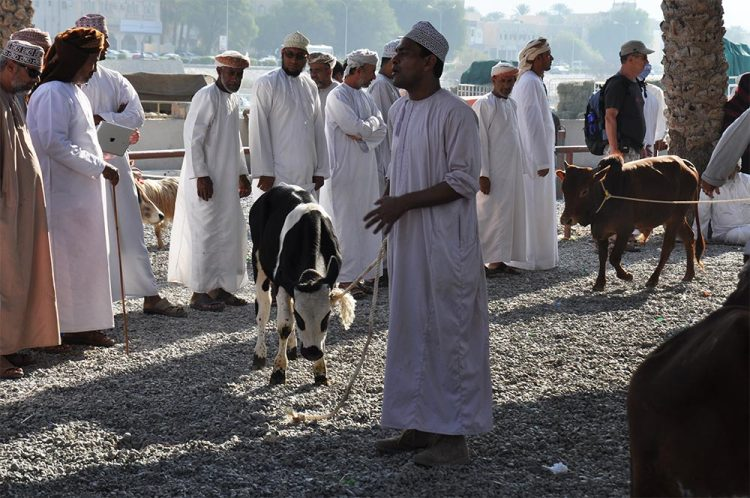 Nizwa-marché-aux-bestiaux