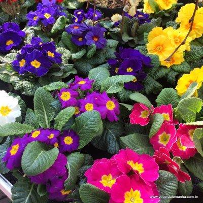 primavera-na-alemanha (6)